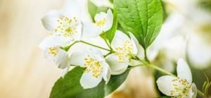 witte bloemetjes hovenier