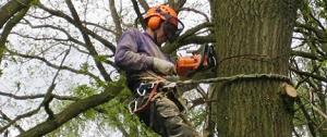 vakkundige verzorging bomen